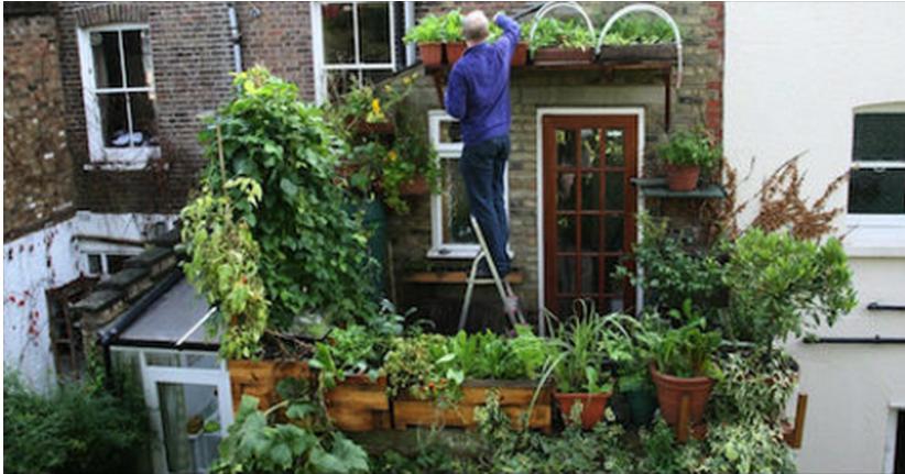 Tuinieren Op Balkon : Verbouw voedsel in aan en op je huis permacultuur nederland