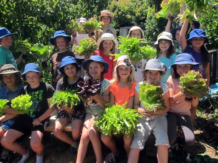 school-garden-lettuces