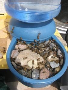 Een handige insectendrinkplek.