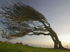 Boom die in de groei sterk gestuurd is door een dominante windrichting