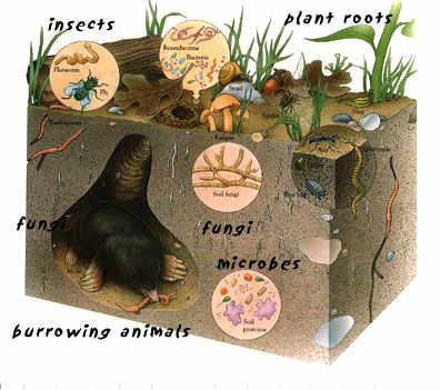 Zorg voor levende bodems zodat je vele helpers in je systeem krijgt om je bodem vruchtbaarder te maken en te houden.