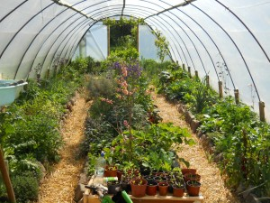 may-2011-permaculture-cottage-014